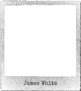 witte steltenloper