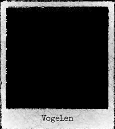 Straattheater-Vogelen230-c